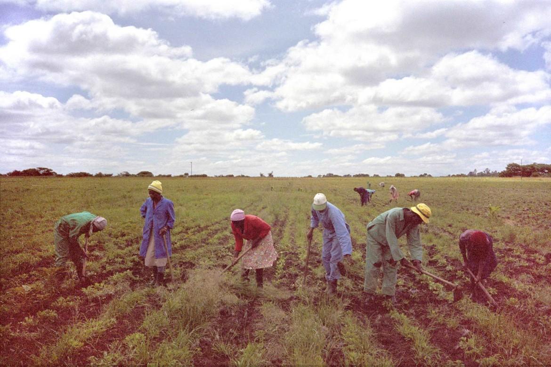 Zimbabwe landbewerken 30x45 web kleiner